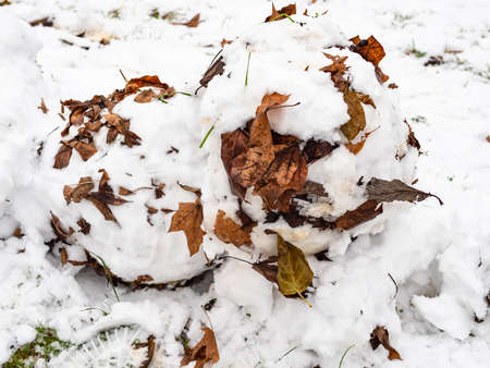 snowball shaped from the first snow with fallen leaves closeup in city park on cold autumn day