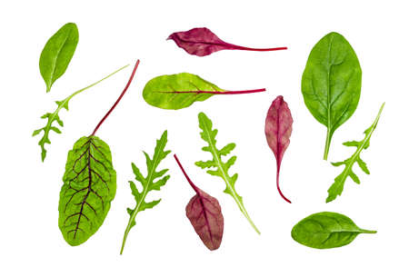 single leaves of leafy vegetables cut out on white background