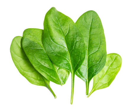fresh leaves of Spinach leafy vegetable cut out on white background