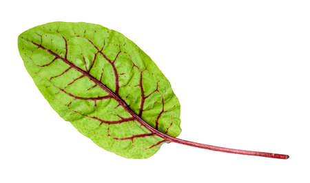 natural leaf of Chard leafy vegetable cut out on white background