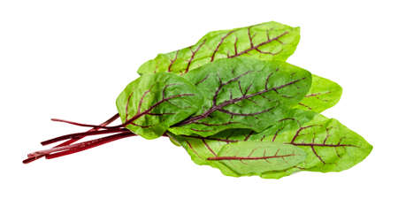 few fresh leaves of Chard leafy vegetable cut out on white background