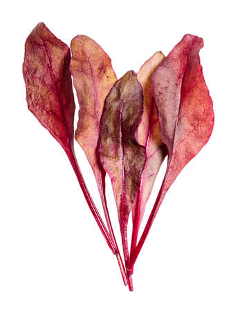 bunch of fresh leaves of red Chard leafy vegetable cut out on white background 스톡 콘텐츠