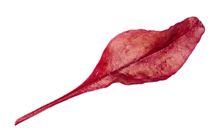 natural leaf of red Chard leafy vegetable cut out on white background 스톡 콘텐츠