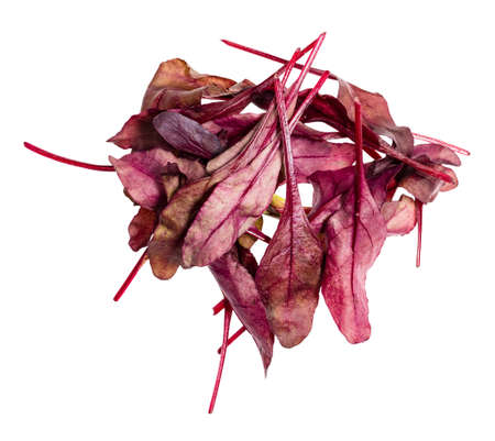 heap of fresh leaves of red Chard leafy vegetable cut out on white background
