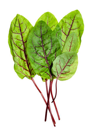 bunch of fresh leaves of Chard leafy vegetable cut out on white background