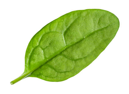 natural leaf of Spinach leafy vegetable cut out on white background 스톡 콘텐츠