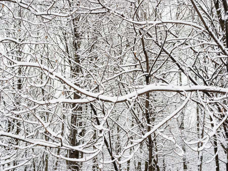 snow-covered thicket in city park on overcast winter day