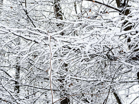 snow-covered tree twigs and branches in city park on overcast winter day