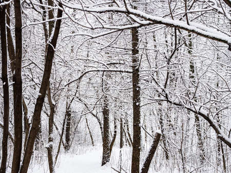 footpath in snow between snow-covered trees in snowy city park on overcast winter day Stock fotó