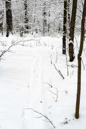 ski track in deep snow in snowy city park on overcast winter day
