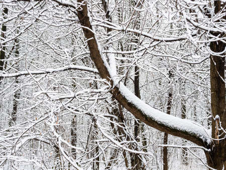 matted snow-covered tree branches in city park on overcast winter day