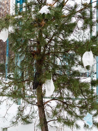 used disposable face masks are hanging on small pine tree on city street in winter day