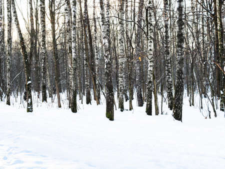 bare birch trees near snowy path in snow-covered city park in winter morning Stock fotó