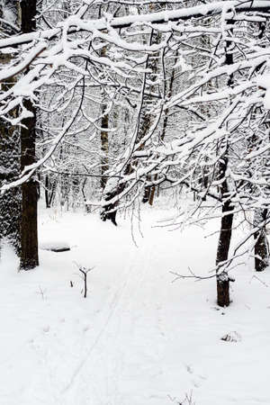 snow-covered tree branches over ski track in snowy city park on overcast winter day Stock fotó