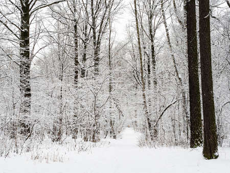 snow-covered way in snowy city park on overcast winter day Stock fotó - 162830098