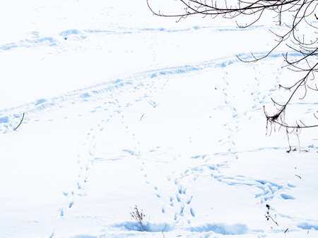 footprints and ski track in deep snow at surface of snow-covered frozen river in city park in winter twilight Stock fotó