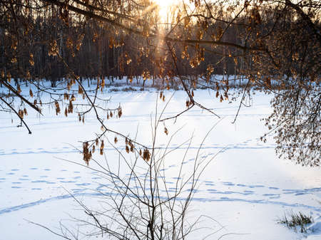 sunlit dried seeds of maple tree and snow-covered frozen river in city park illuminated by setting sun in winter twilight (focus on the seeds in foreground) Stock fotó