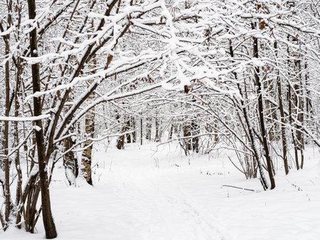 path in snow in snowy city park on overcast winter day Reklamní fotografie