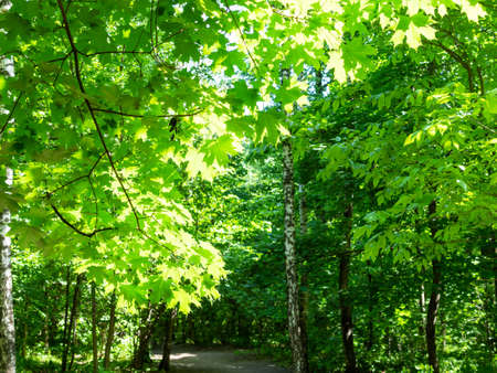 green lush foliage illuminated by sun over path in city park on sunny summer day