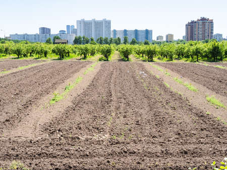 plowed agricultural field and garden in city on sunny summer day