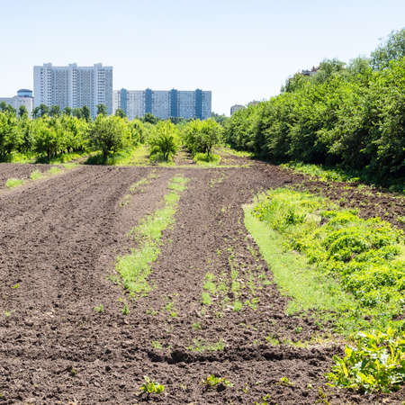 plowed field and garden in city and high-rise urban houses on horizon on sunny summer day