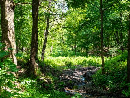 little stream in overgrown ravine in green city park on sunny summer day Stock fotó