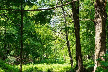overgrown ravine in green city park on sunny summer day Stock fotó
