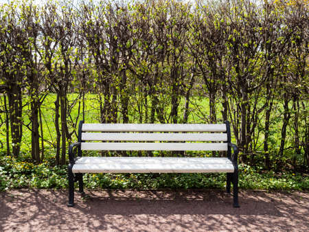 empty white bench on alley in city park on sunny spring day Stock fotó