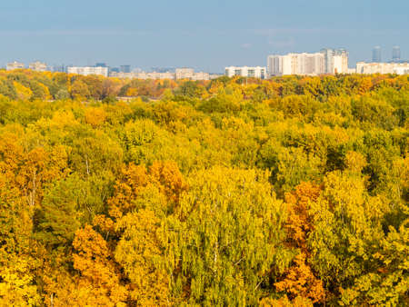 above view of lush foliage of trees in colorful city park on sunny autumn day