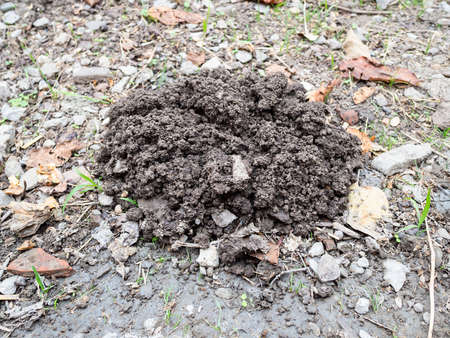 mound of earth dug by mole close up in field