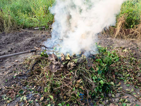 cut branches and stems of plants removed from garden are smoldered at stake in autumn evening