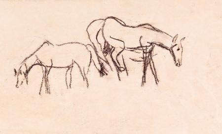 grazed: Two horses are grazed in field