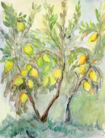 lemon tree: Lemon tree in the  summer, watercolor landscape
