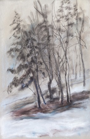 Winter landscape, pines in foggy day photo
