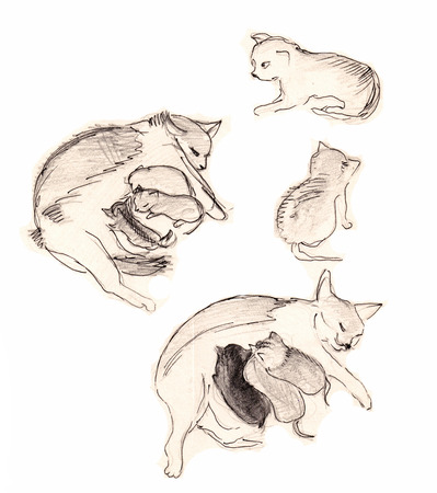 Instant sketch, cat and kittens