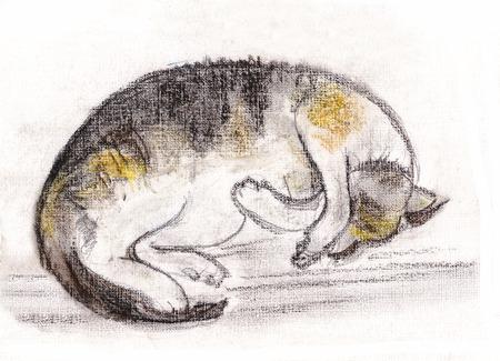 cat sleeping: instant sketch,  cat sleeping on floor