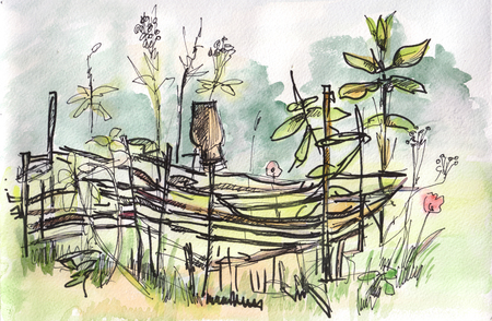 wattle: instant sketch,  wattle fence, watercolor