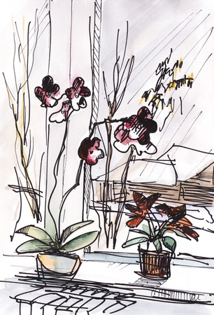 Flowers of orchid on window sill