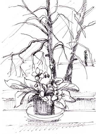 Winter day, flowers on a window sill