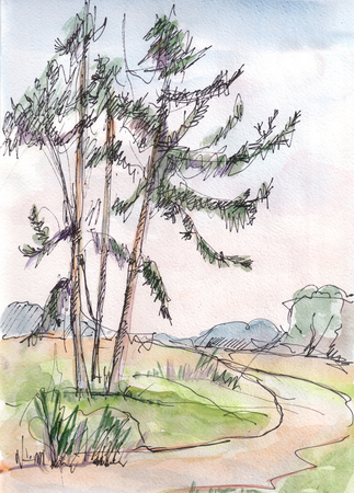 Instant sketch,  watercolor landscape with pines