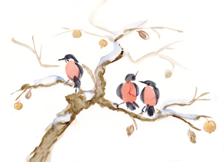 Bullfinches on branch of apple-tree, winter
