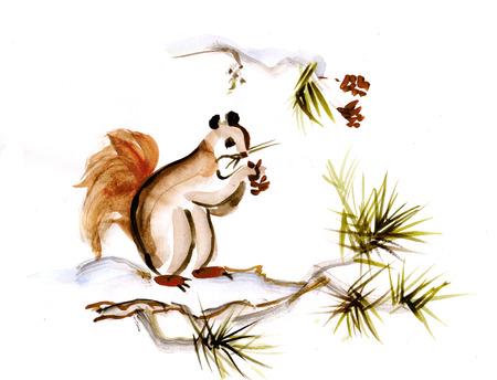 Squirrel on branch of pine Banco de Imagens