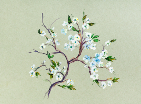 Blossoming branch of plum tree