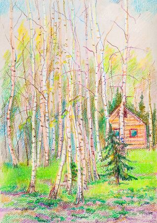 pastel picture, spring  landscape with  high birches and spruces Banco de Imagens
