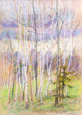 Rural landscape birch grove in spring, April
