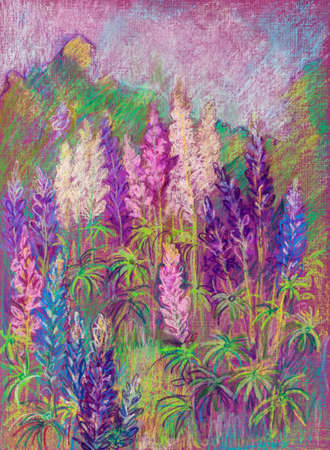 Summer view, blosssom of multicolored lupines, July