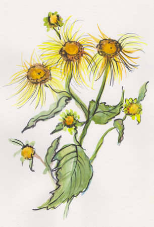 Elecampane in summer, watercolor painting in japanase style