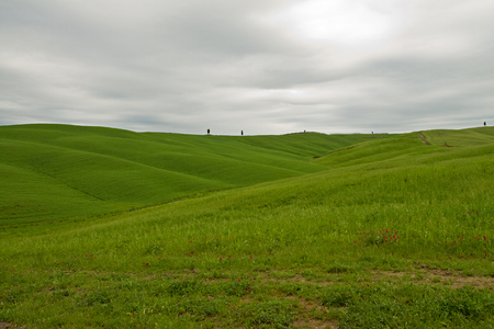 val d'orcia: Hills in the Val dOrcia in Tuscany Italy