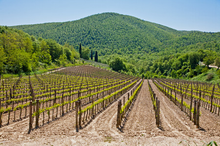 val d'orcia: Vineyard in Val dOrcia in Tuscany, Italy Stock Photo