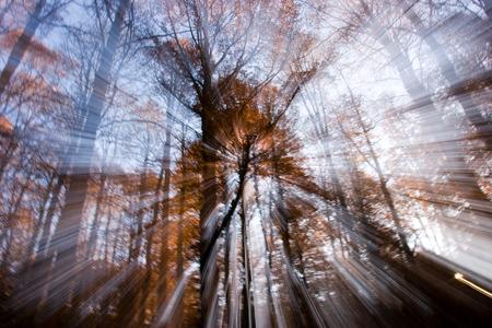 abruzzo: Autumn in the National Park of Abruzzo in Italy